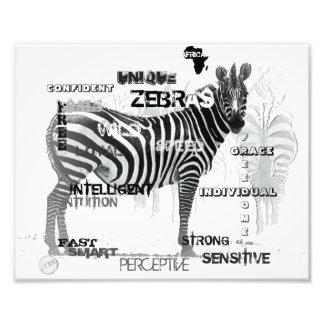 Foto Zebras originais