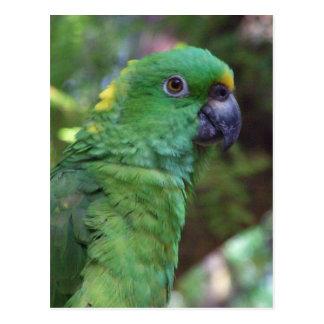 Fotografia amarela de Naped Amazon Cartão Postal