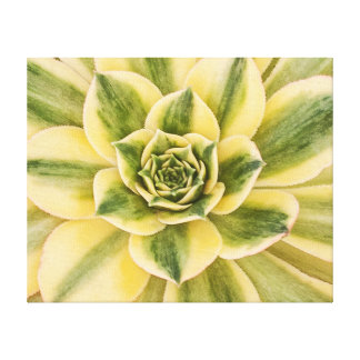 Fotografia botânica, verde do Succulent em canvas