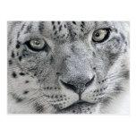 Fotografia branca da natureza do leopardo de neve cartões postais