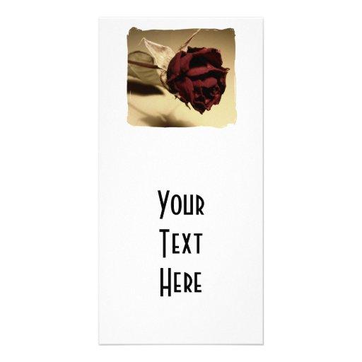 Fotografia cor-de-rosa secada - cor cartões com fotos personalizados