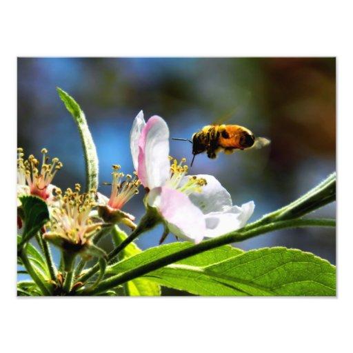 Fotografia da abelha & da flor branca