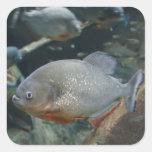 Fotografia da cor da natação dos peixes do Piranha Adesivo Em Forma Quadrada