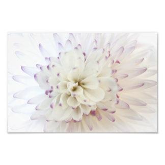 Fotografia da flor branca