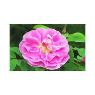 Fotografia da flor cor-de-rosa com abelha