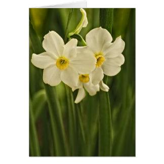 Fotografia da flor do narciso do primavera cartão comemorativo
