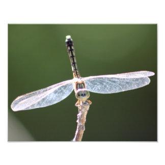 """Fotografia da libélula do """"Gossamer"""""""