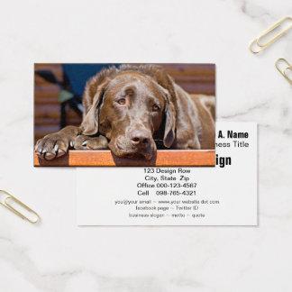 Fotografia de labrador retriever do chocolate cartão de visitas