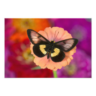 Fotografia de Sammamish Washington da borboleta 11