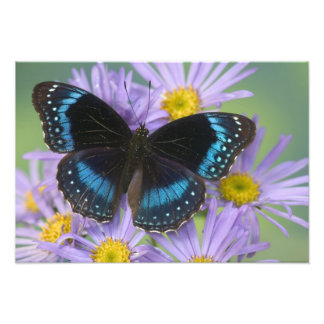 Fotografia de Sammamish Washington da borboleta 14