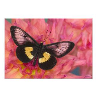Fotografia de Sammamish Washington da borboleta 17