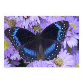 Fotografia de Sammamish Washington da borboleta 20