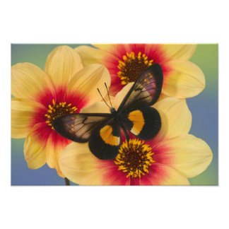 Fotografia de Sammamish Washington da borboleta 38
