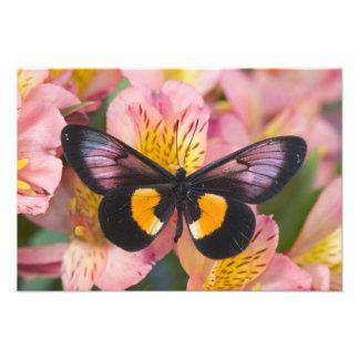 Fotografia de Sammamish Washington da borboleta 44