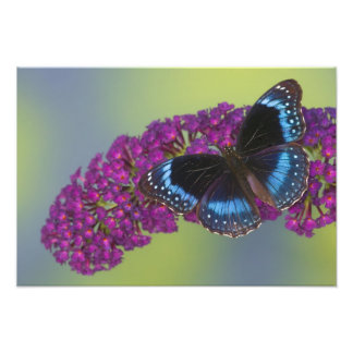 Fotografia de Sammamish Washington da borboleta 45