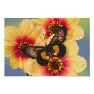 Fotografia de Sammamish Washington da borboleta 48