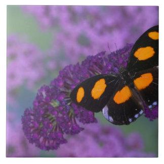 Fotografia de Sammamish Washington da borboleta em Azulejos