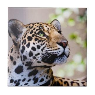 Fotografia do leopardo