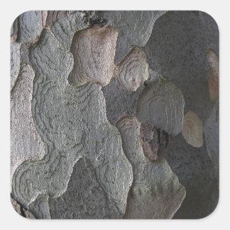 Fotografia do macro do latido de árvore adesivo em forma quadrada