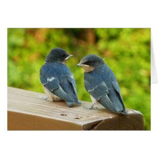 Fotografia do pássaro da natureza das andorinhas cartão comemorativo