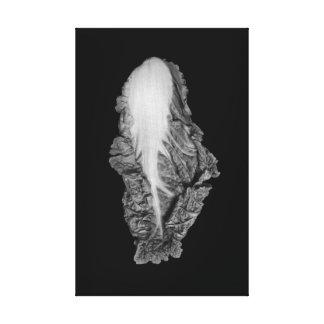 Fotografia do retrato da couve chinesa