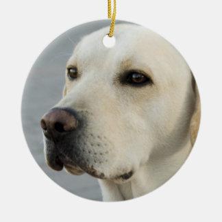 Fotografia dourada de labrador retriever enfeite