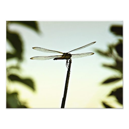 Fotografia empoleirada da libélula