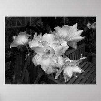 Fotografia floral preto e branco pôster
