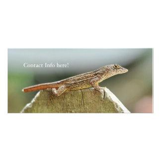 Fotografia legal do lagarto 10.16 x 22.86cm panfleto