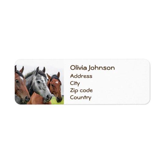 Fotografia maravilhosa do garanhão dos cavalos etiqueta endereço de retorno