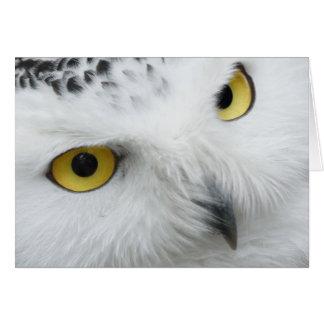 Fotografia nevado da coruja cartão comemorativo