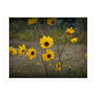 Fotografia preta amarela do Wildflower de Florida Cartão Postal