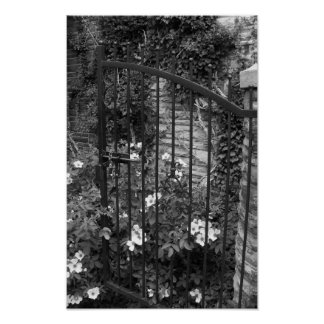 Fotografia preto e branco das videiras da porta do pôster