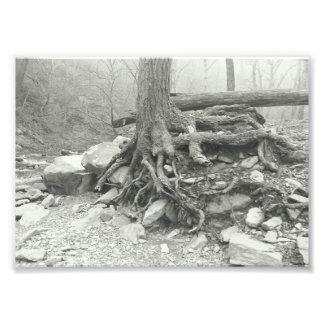 Fotografia preto e branco de raizes velhas da