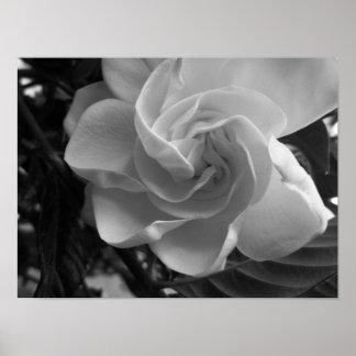 Fotografia preto e branco do Gardenia Pôster
