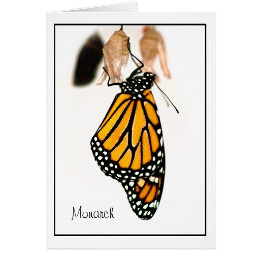 Fotografia recém-nascida da borboleta de monarca cartões