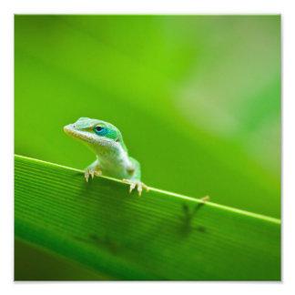 Fotografia verde da arte do encontro do lagarto de