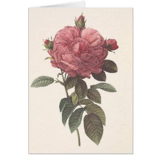 Fotorreceptor Redoute - o giganteo do flore do Cartão Comemorativo