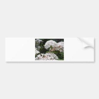 Fotos da borboleta adesivo