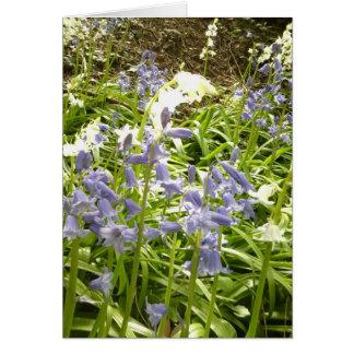 Fotos do Bluebell/detalhes 2 - cartão do primavera