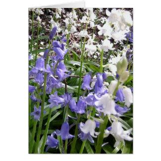 Fotos do Bluebell/detalhes - cartão do primavera