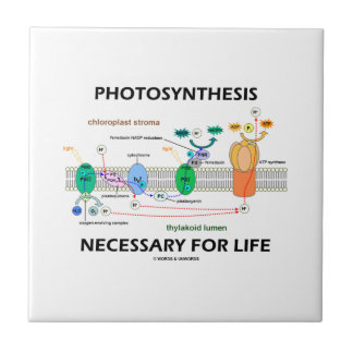Fotossíntese necessária para a vida Luz-Dependente Azulejo Quadrado Pequeno