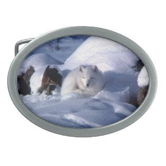 Fox ártico - Coleção americana do mamífero