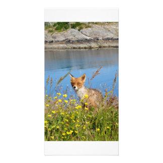 Fox no campo de flor no cartão de Noruega do sol