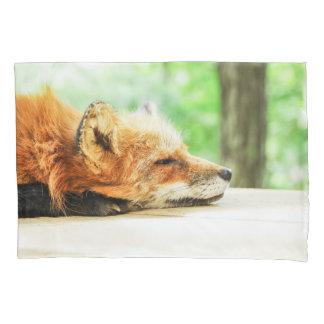 Fox vermelho sonolento nos animais selvagens do