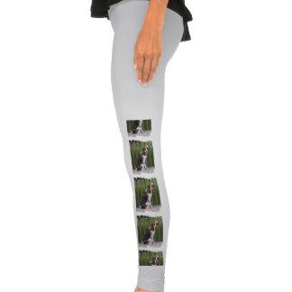 Foxhound inglês calça colada