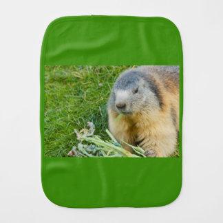 Fralda De Boca fim-acima de uma marmota sociável no pano do burp