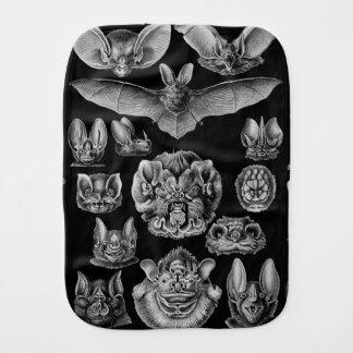 Fraldinha De Boca Chiroptera 1904 de Haeckel