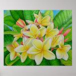 Frangipani havaiano poster