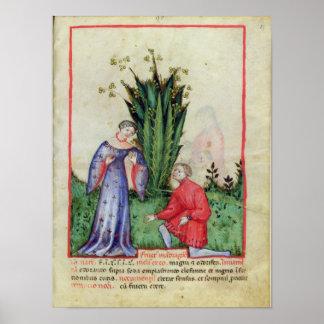 Fruta de Mandrake, from Tacuinum Sanitatis Pôster